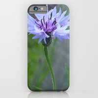 iPhone & iPod Case featuring Cornflower  by Emele Photography