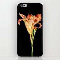Orange Daylily Illustration iPhone & iPod Skin