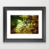 Butterfly On Flower - Co… Framed Art Print
