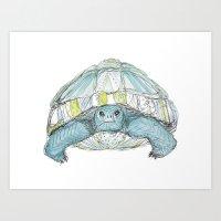 Turquoise Tortoise Illus… Art Print