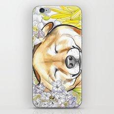 Jay Jay the happy Shiba iPhone & iPod Skin