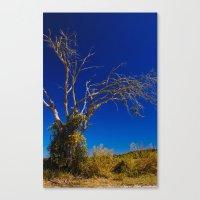 Naked Tree Canvas Print