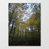 Out In The Woods Canvas Print