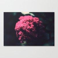 Flower... Canvas Print
