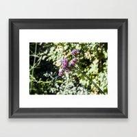 In The Garden.. Framed Art Print