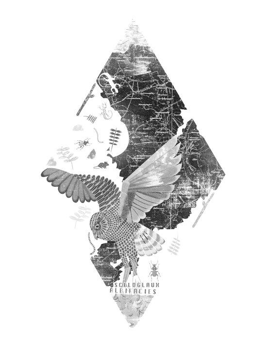 OWL MAP Canvas Print