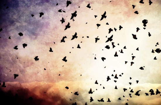 Bird's Flyin' High Art Print