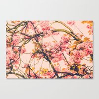 sweet sweet cherry blossoms Canvas Print