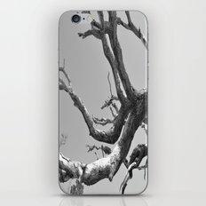 Driftwood Ladder B/W iPhone & iPod Skin