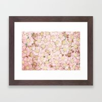 Pink Bloom  Framed Art Print