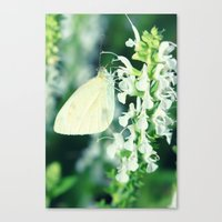 White Cabbage Butterfly On A Flower, Pieris rapae Canvas Print