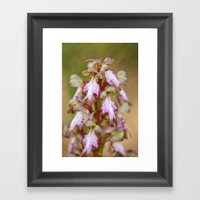 Wild Orchid Barlia Rober… Framed Art Print