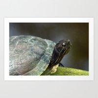 Turtle on a Log Art Print