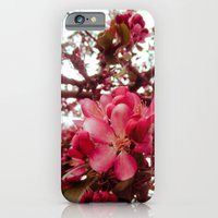 iPhone & iPod Case featuring blossom. by rachel kelso