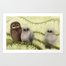 Northern Spotted Owls Art Print