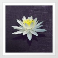 Lily with Purple Ripples Art Print