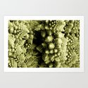 Broccoli 3 Art Print