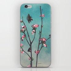Hummingbears iPhone & iPod Skin