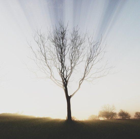 Insta Tree of Life Art Print