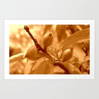 Pattie's Peach Buds Art Print