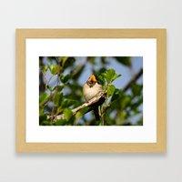 Singing Swallow Framed Art Print