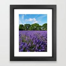 Ripening English Lavender Framed Art Print