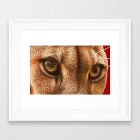 The Eyes Of The Cougar Framed Art Print