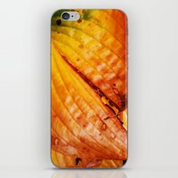 The Colors Of Autum iPhone & iPod Skin