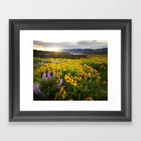 Oregon Wildflowers Framed Art Print
