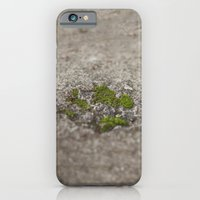 iPhone & iPod Case featuring Set in Stone by Dena Brender Photography