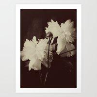 White Peony Art Print