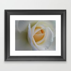 White Rose Framed Art Print