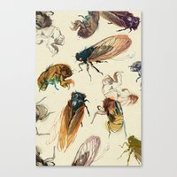 summer cicadas Canvas Print