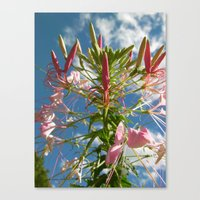 Pink in the Sky Canvas Print