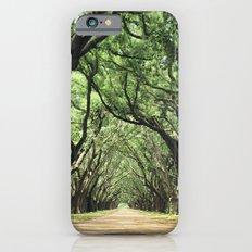 Canopy of Oaks iPhone 6s Slim Case
