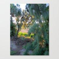 Hidden Light Canvas Print
