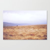 Mini Horse Canvas Print