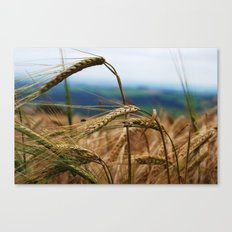 summer hay Canvas Print