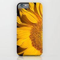 iPhone & iPod Case featuring sunflower by mark ashkenazi
