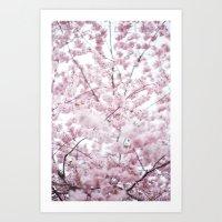 Sakura Bloom. Art Print