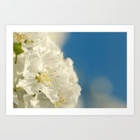 Spring Crab Apple Blosso… Art Print