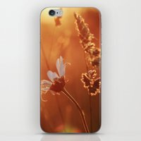 Sweet Summer Memories iPhone & iPod Skin