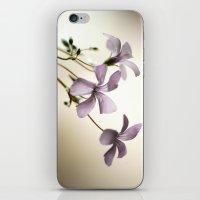 Sorrel iPhone & iPod Skin