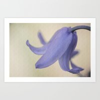 Spanish Bluebell Flower Art Print