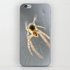 Little Spider iPhone & iPod Skin