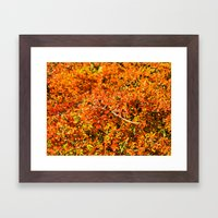 Intense orange. Framed Art Print
