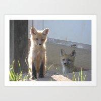 fox XVI Art Print