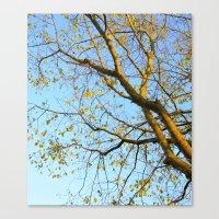Last Leaves Of Autumn Canvas Print