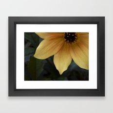 sunny bloom. Framed Art Print