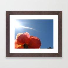 Translucent Rose III Framed Art Print